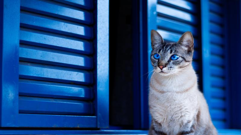 Cat by a blue door